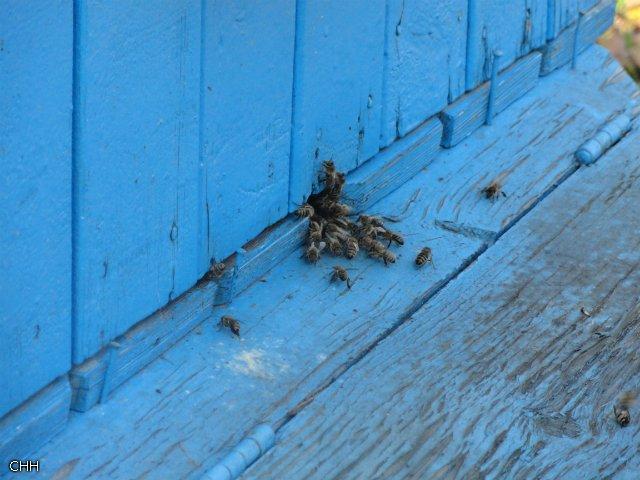 Пчеловоды есть? Всё о пчеловодстве Bafd7e511aa3
