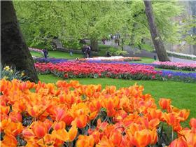 Рай тюльпанов или Кёкнхов - 2012 4119f96869c5t