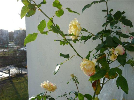 Осень, осень ... как ты хороша...( наше фотонастроение) - Страница 4 0af3a6f225e3