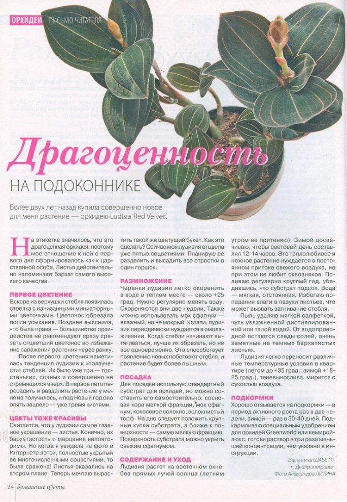 орхидея или фаленопсис Bab75bea45a3