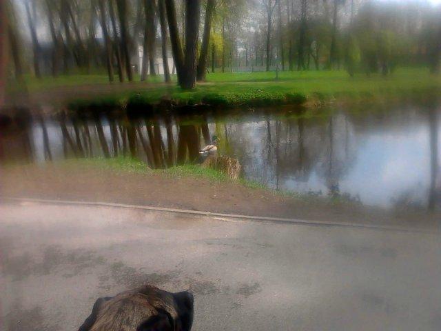 Наши собаки, друзья и гости, кот Мензурка - Страница 31 B9d1c73979c1