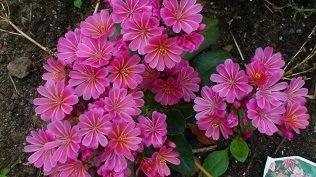 И мои хвастушки-цветушки! - Страница 36 73ea6bd36db5