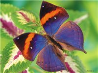 Цветы и бабочки F07f6a531038