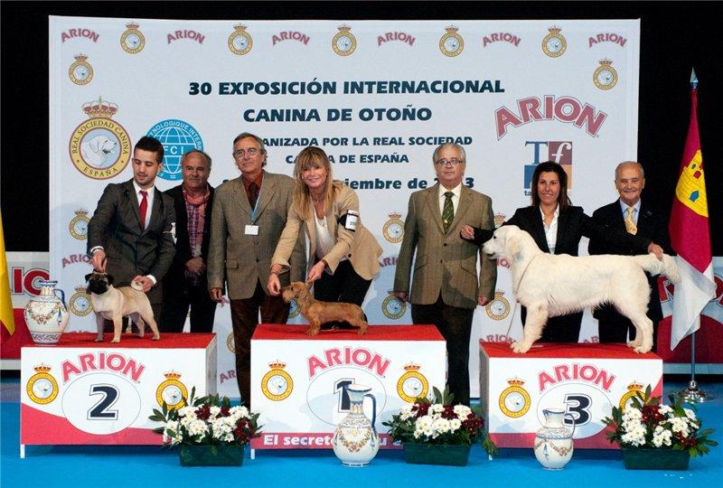 Don Carlos Salas Melero (ЕС \ Испания ) A2980d4be21e