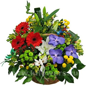 Поздравляем с Днем Рождения Татьяну (Варина бабушка) 6e7616fdcef1t
