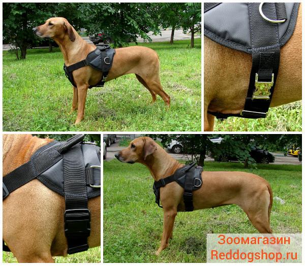 Интернет-магазин Red Dog- только качественные товары для собак! - Страница 3 Ea7f4a31cc22