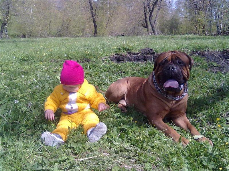 """Фотографии """"Бульмастиф и дети"""" - Страница 4 3ecd15918c46"""