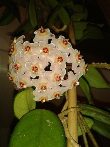 И у цветов весна)) 051347be6f8b