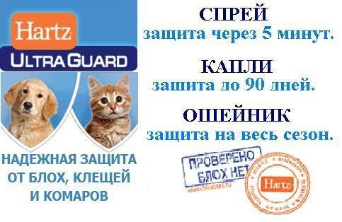 Интернет-зоомагазин Pet Gear - Страница 6 49ced245e07a