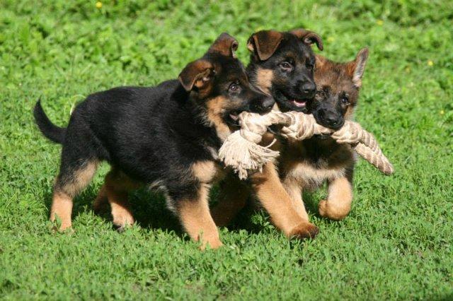 Собаки Татьяны Моисеенковой, кот Мензурка - Страница 8 8fa49ee4ae88