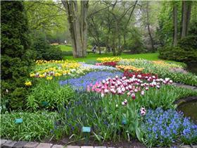 Рай тюльпанов или Кёкнхов - 2012 1fc25f093a74t