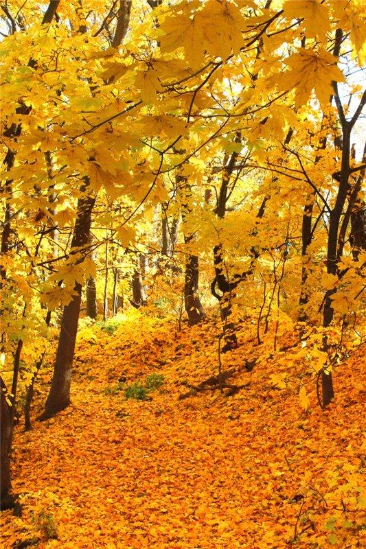 Золотая осень 485646c5c2f0