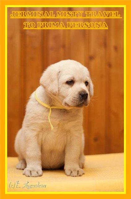 "Питомник ""Прима Персона"". Мои собаки-моя жизнь! 840a50f23e33"