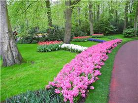 Рай тюльпанов или Кёкнхов - 2012 481969bb7e94t
