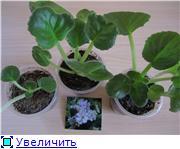 Наши любимые домашние растения! - Страница 10 69a03dac9e19t