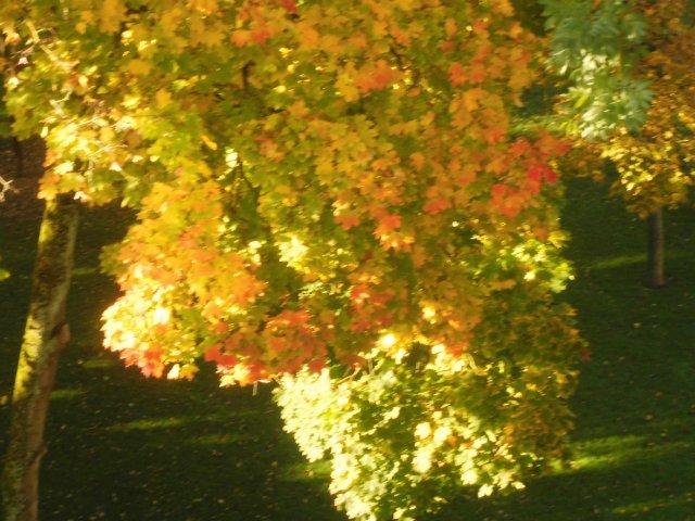 Золотая осень 62b2a0f84160