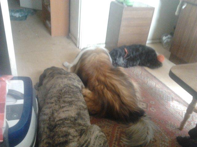 Наши собаки, друзья и гости, кот Мензурка - Страница 30 900d297ef8ff