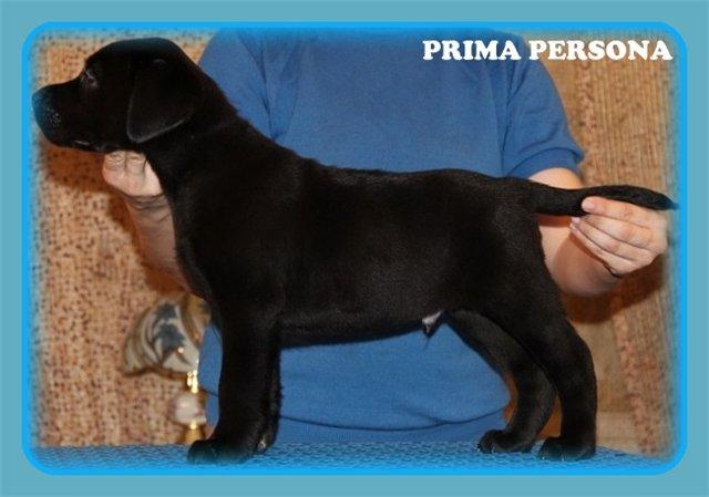 "Питомник ""Прима Персона"". Мои собаки-моя жизнь! - Страница 2 57ad224b0239"
