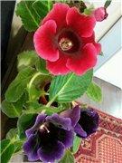 Садовые многолетние цветы - давайте меняться - Страница 3 F0f09d549d6ft