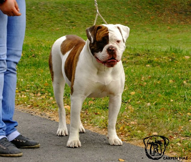 Собаки питомника Carpen Diaz - Страница 2 957515b18f7e