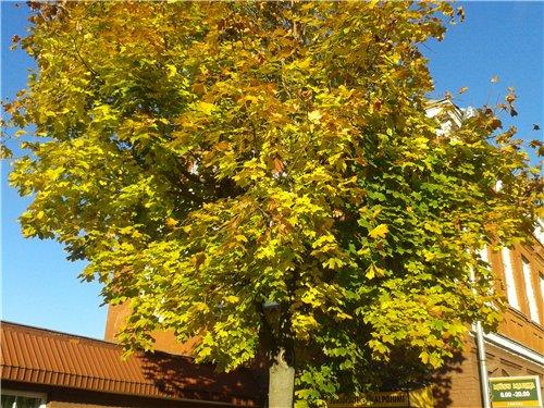 Осень, осень ... как ты хороша...( наше фотонастроение) - Страница 7 5a45c3c4d574