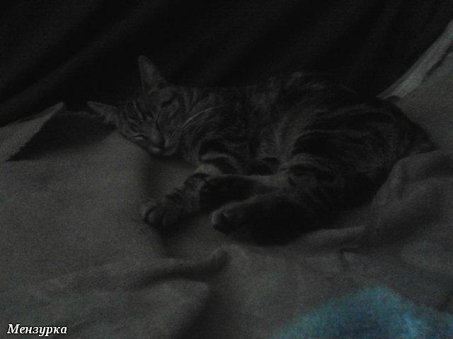 Собаки Татьяны Моисеенковой, кот Мензурка - Страница 7 Afb138f10df0