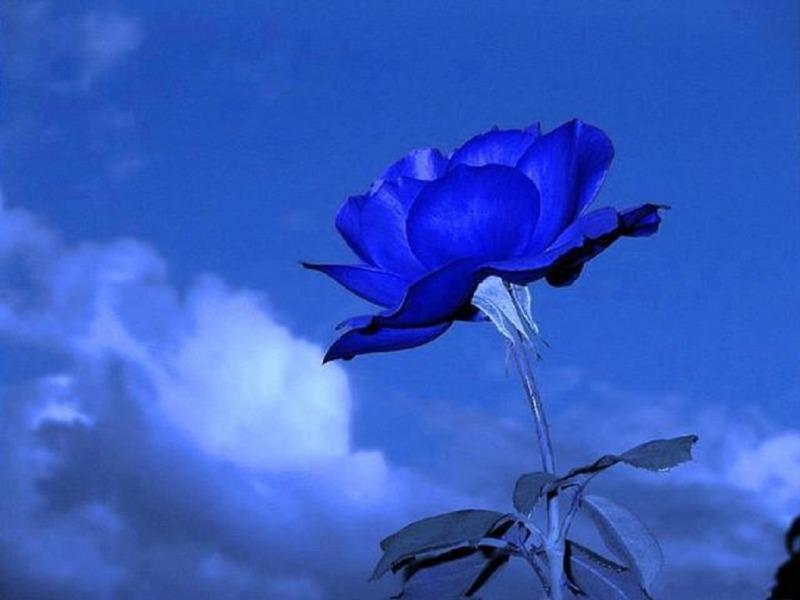:::Mi universo azul::: 5a4d448cc126
