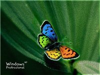 Цветы и бабочки 06760200da81