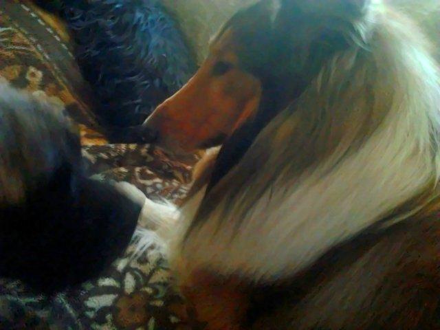 Наши собаки, друзья и гости, кот Мензурка - Страница 30 0ecb90d29195
