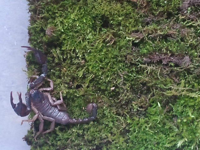 My scorpions  7f4e91b8e026