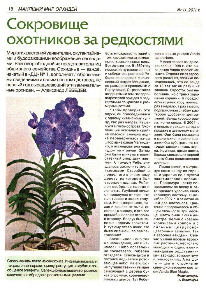 орхидея или фаленопсис A126b0f44f58