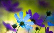 Как прекрасен этот мир - Страница 2 3909f9b67c78t