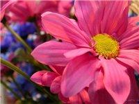 Цветы и бабочки 008027033066
