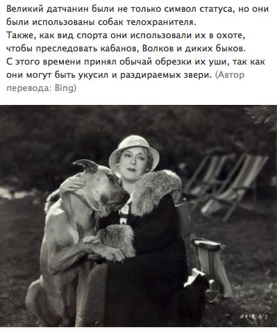 """Доги и """"светское""""общество 72dd99539ef5"""