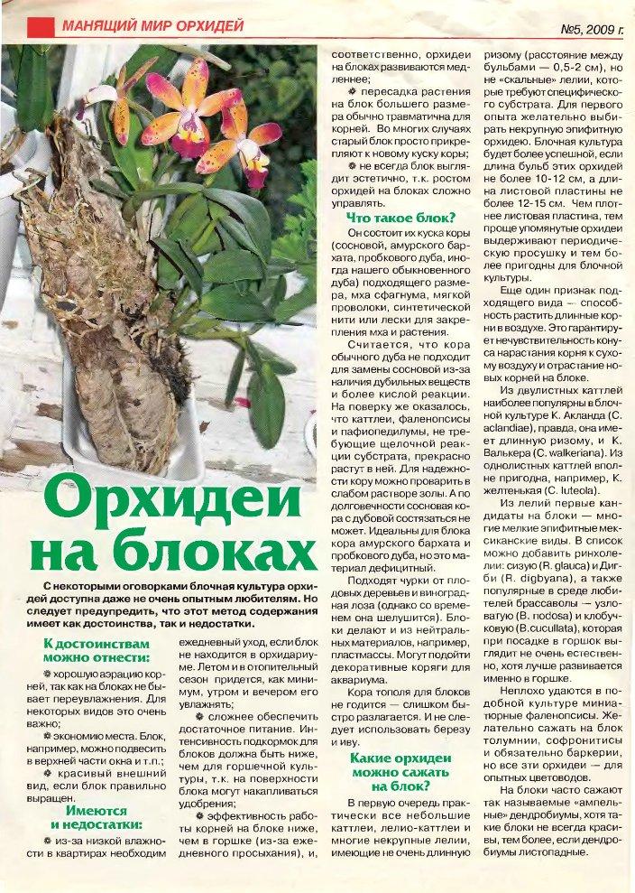 орхидея или фаленопсис 3acc57991dca