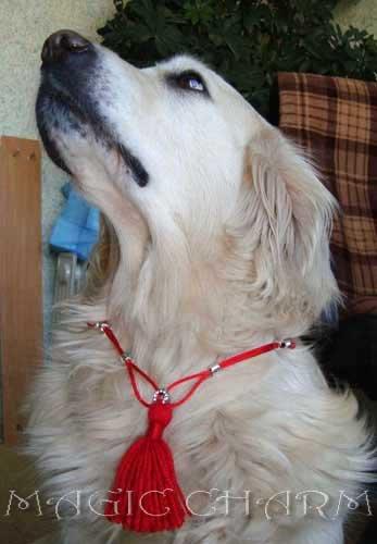 Magic Charm - ошейники, обереги, украшения и аксессуары для собак 77a2055940a4