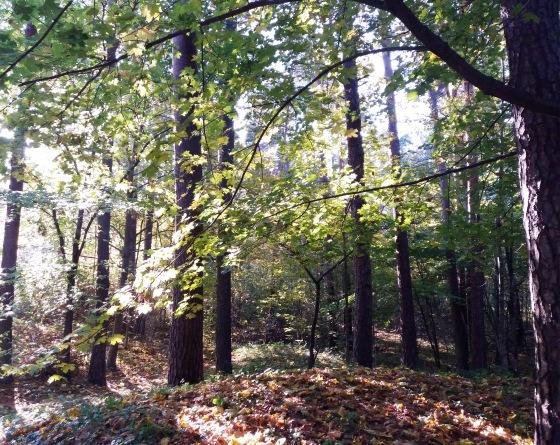 Осень, осень ... как ты хороша...( наше фотонастроение) - Страница 8 B07318f73cbb