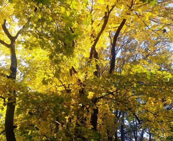 Осень, осень ... как ты хороша...( наше фотонастроение) - Страница 8 5cb55a8bfb65
