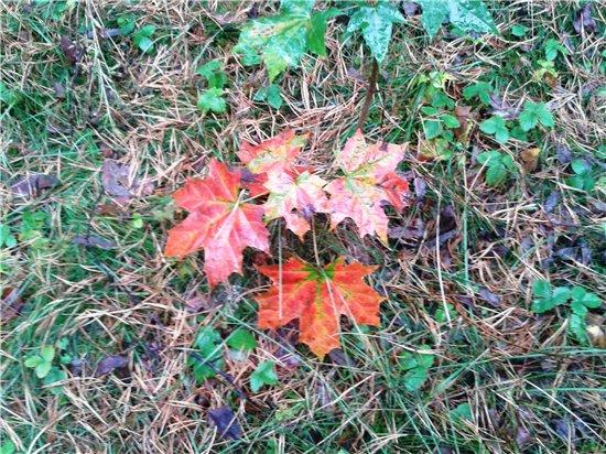 Осень, осень ... как ты хороша...( наше фотонастроение) - Страница 5 6b5ece13327d