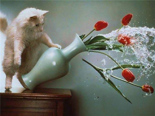 Сама по себе гулёна (о кошках) - Страница 2 C4236aa33324