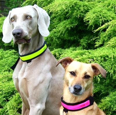 Интернет-магазин Red Dog- только качественные товары для собак! - Страница 4 5cd5cf8def99