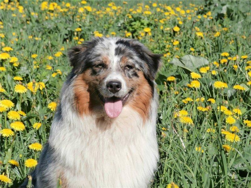 Мои собаки: Зена и Шива и их друзья весты 1d387f97d8b1