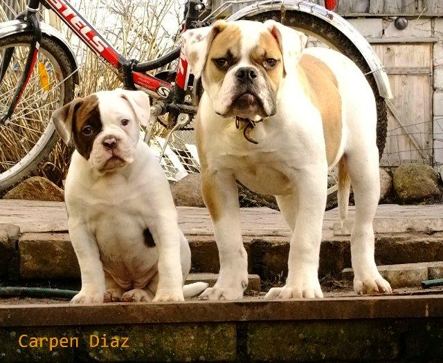 Собаки питомника Carpen Diaz - Страница 2 4013f3b7e6bc