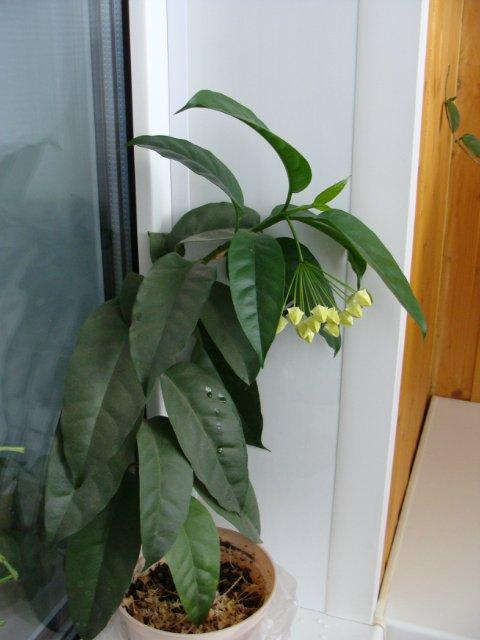 Мои цветочки - Страница 40 776701f1d571