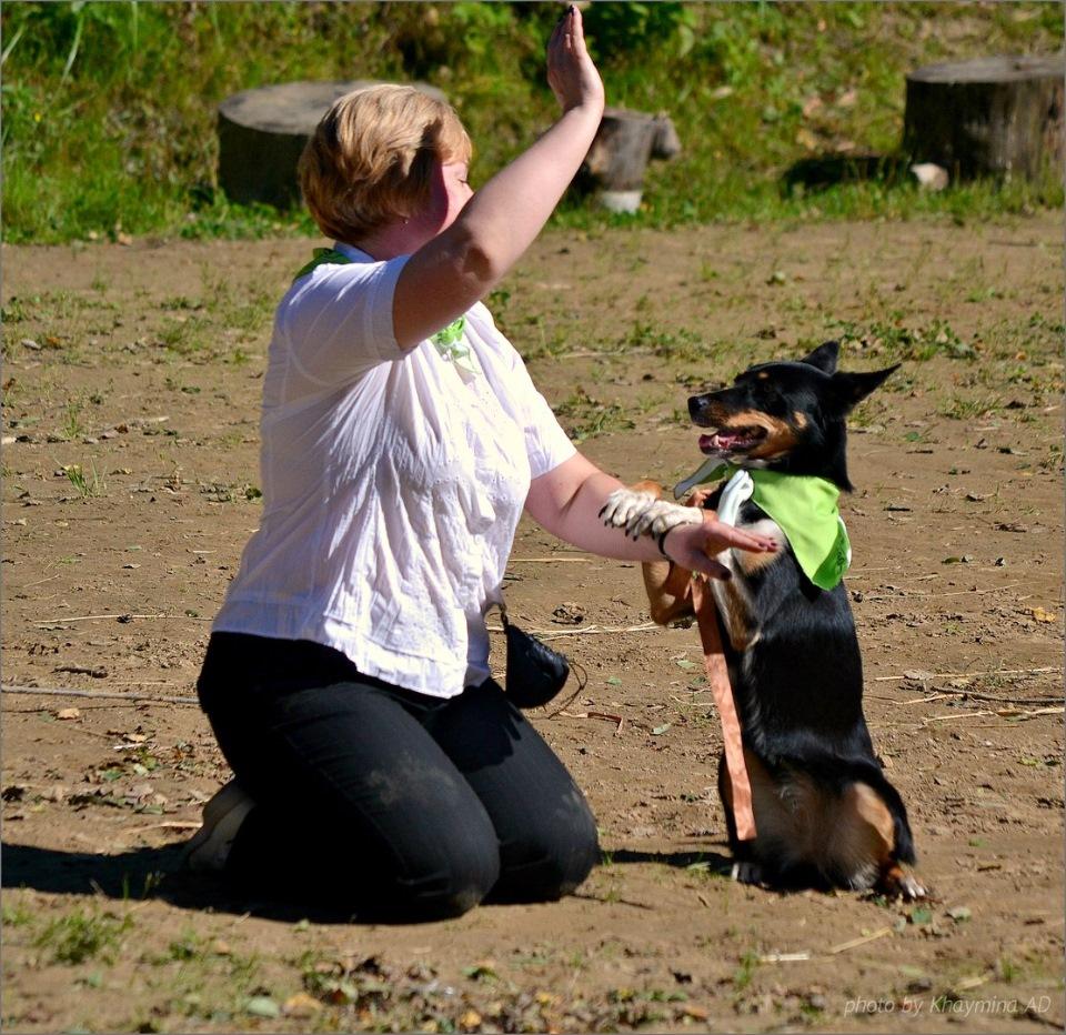 Танцы с собаками - Страница 3 5a176af656f1