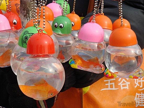 В Китае живые животные продаются в качестве брелоков для ключей 1f79cae56089