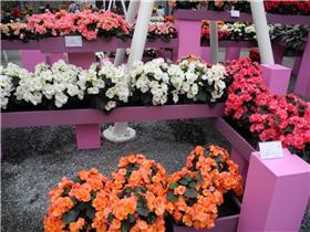Рай тюльпанов или Кёкнхов - 2012 F2fcc6ddfb76t