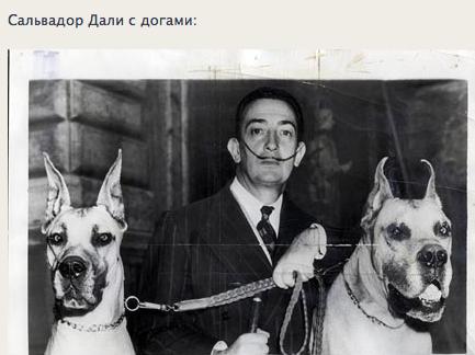 """Доги и """"светское""""общество 33924e4e2fcd"""
