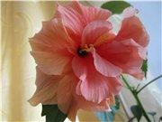 Садовые многолетние цветы - давайте меняться - Страница 3 0eb35c419240t