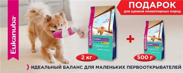Интернет-магазин Red Dog- только качественные товары для собак! - Страница 3 389420efdbd2
